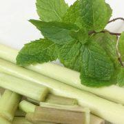 lemongrass-mint